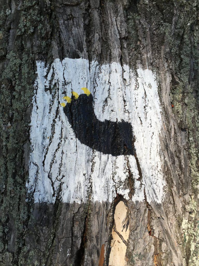 Herb Mrągowa niedźwiedzia łapa