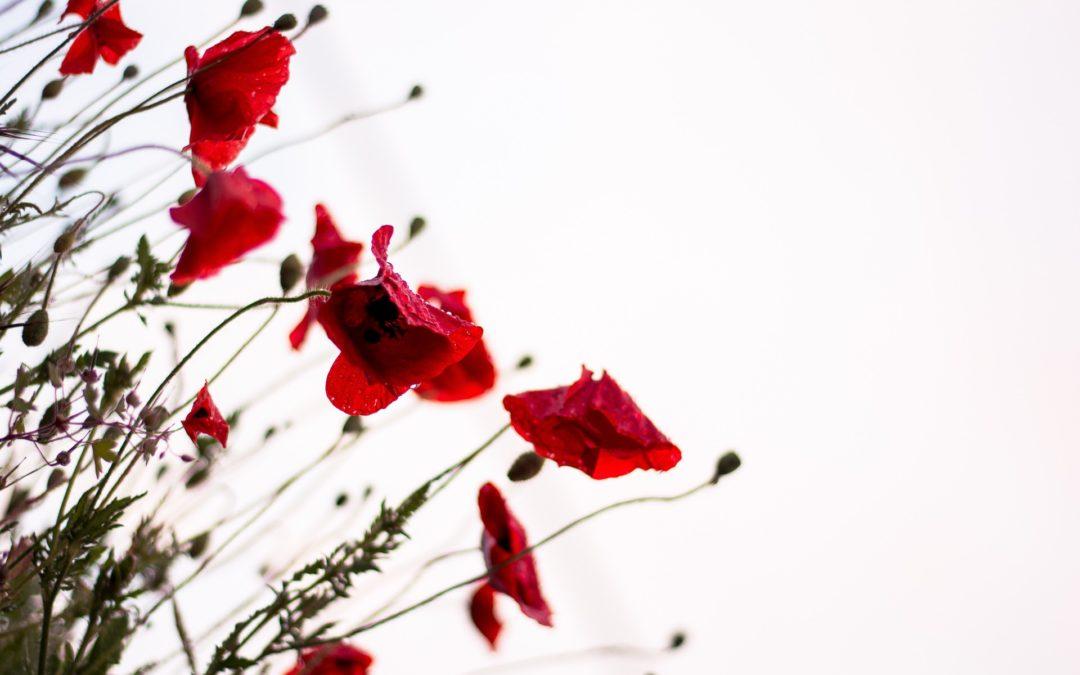 radzenie sobie ze stresem, stres, czerwone kwiaty